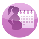 Pregnancy By Week Calculator